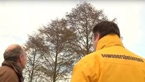 Bomen terug in gemeente Utrecht
