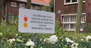 Witte Anjer Perkje in Woerden