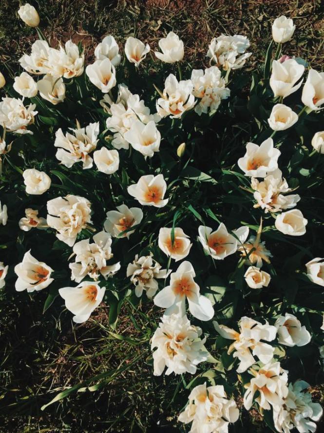 dove si trova il tulipark di roma