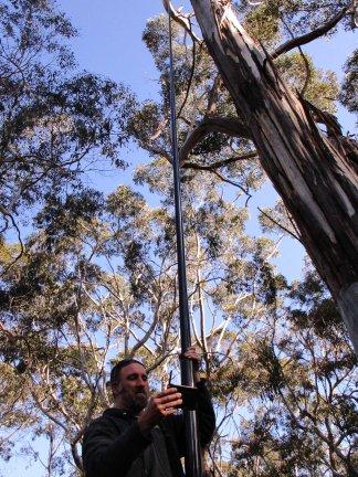 Mike Barth checks a nestling. Photo: Karleah Berris