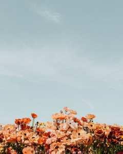 Flowers InzideEdge