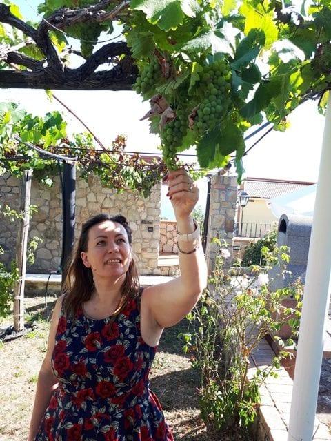 Vynuogės namuose dar nesunokusios