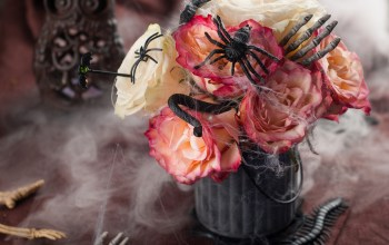 Top 10 decoratiuni si cadouri de Halloween 2020