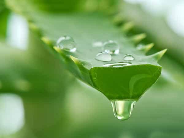 Aloe vera și ulei de ricin