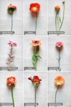 orange-wedding-flower-guide