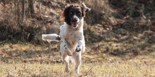 Prepariamo il nostro cane all'inizio della stagione venatoria