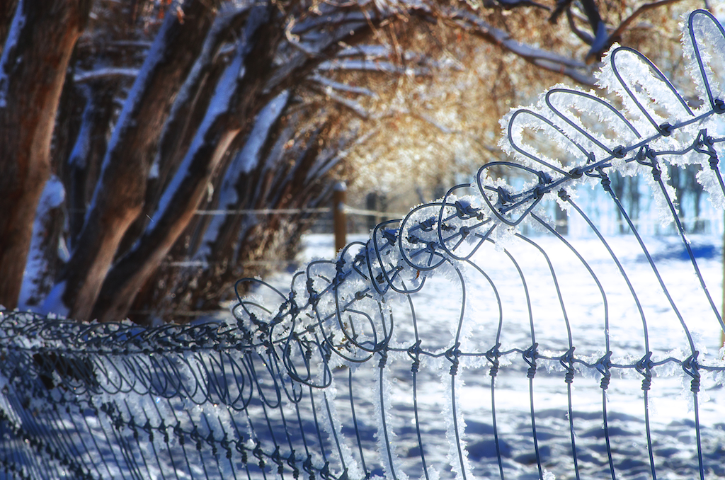 Hoar Frosted Fence