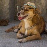 Even dogs get into the busking act in Cuba.