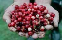 Cranberry, veenbessen, goed ter preventie van urineweg infecties