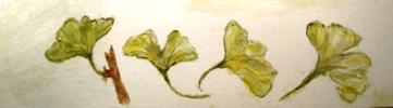 gingko bladeren door M.P.H.Keppel hesselink van Blommestein