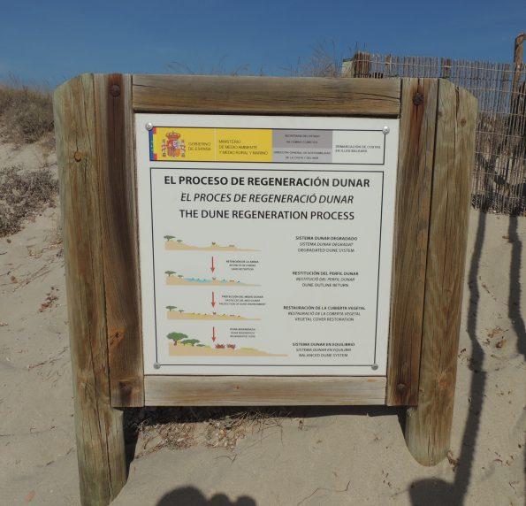 La rigenerazione delle dune