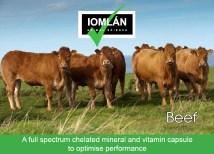 Iomlán beef caps