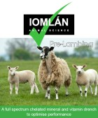Iomlan pre-lambing sticker revised proof