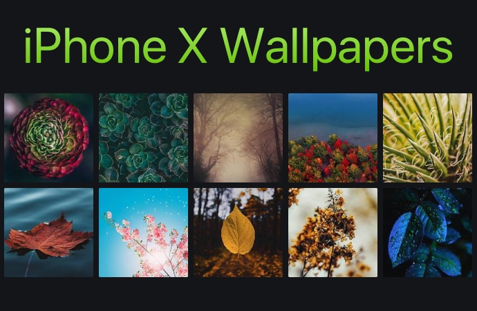 12 Beautiful Iphone X Wallpapers Featuring Leaves And Plants Ep 5