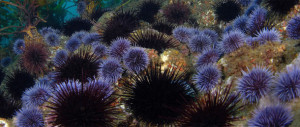 urchins-keystone_banner_large_2x-610x259