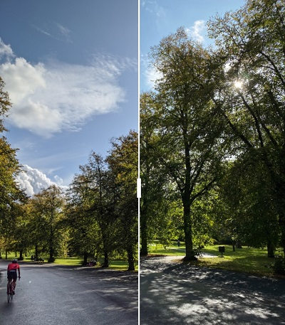 Pixel 4 vs iPhone 11 Pro, bosque