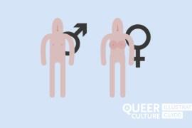 Genere o gender