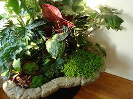 Planters and Patients The Calming Benefits of Indoor Plants