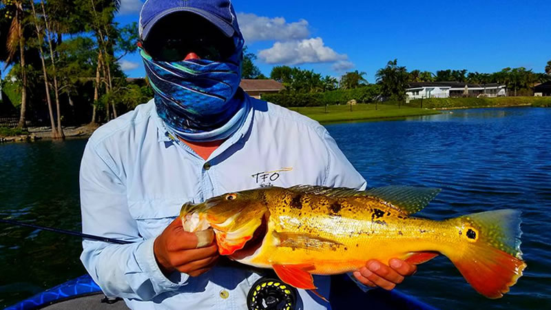Awesome three day fly fishing adventure for miami peacock bass for Fly fishing miami