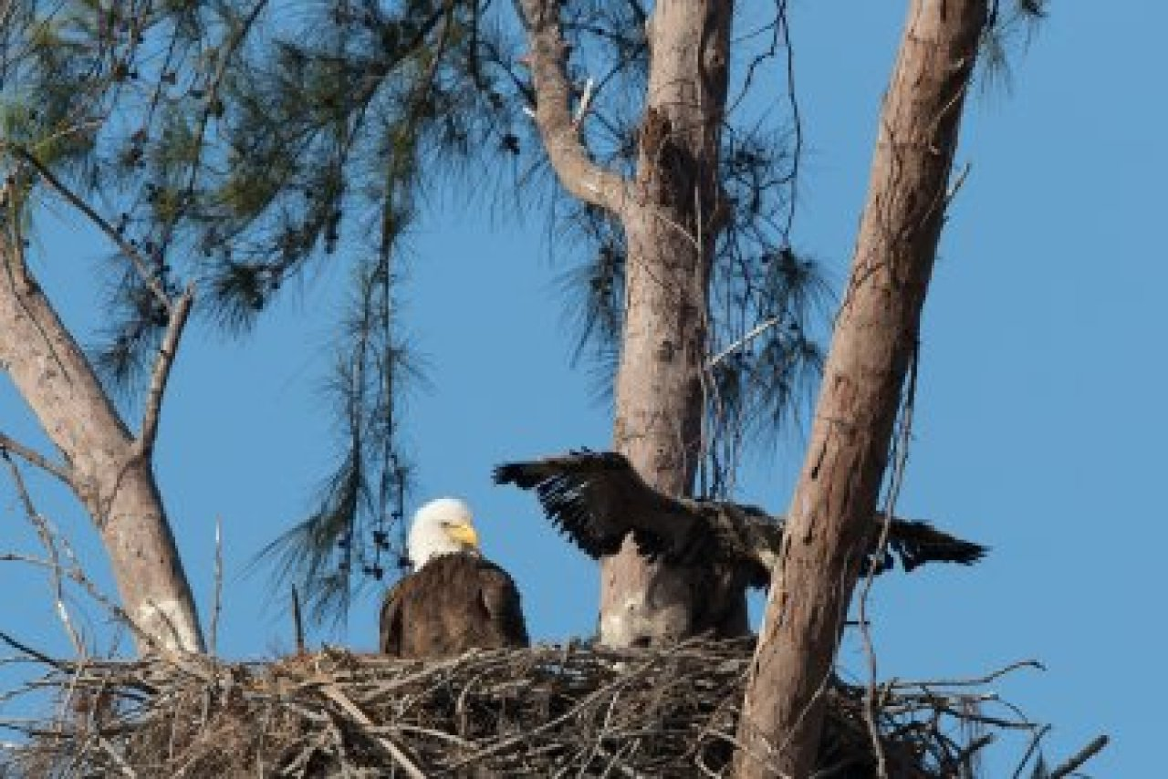 Marco Island Nature Preserve