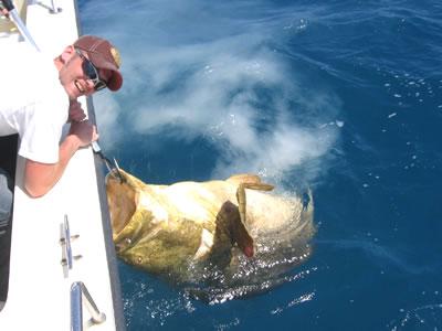 Gulf Fishing Florida
