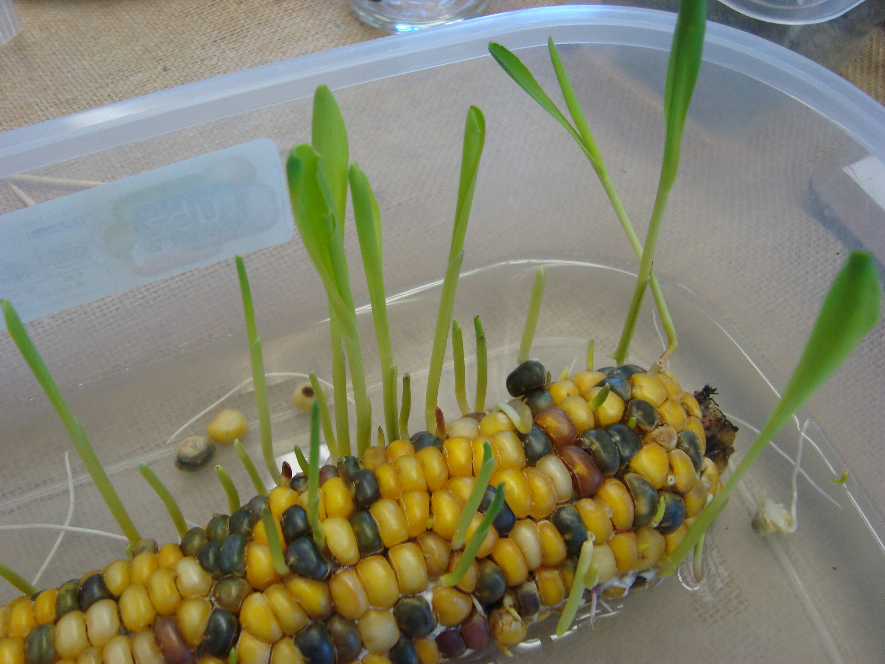 13 Cool Things To Do With Corn And Soybeans