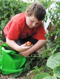 garden 5_0 MFL N Iowa Times