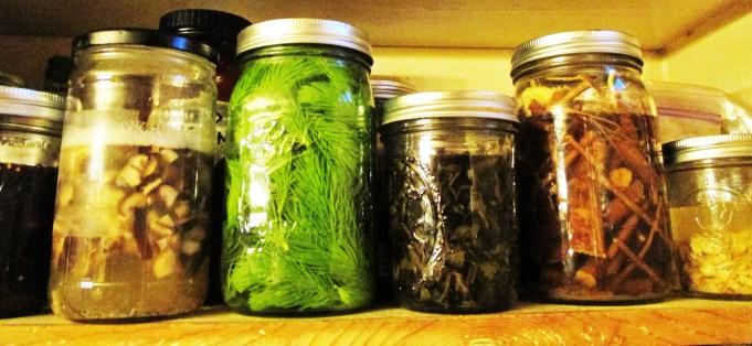 Herbal Tinctures in Jars | Iowa Herbalist
