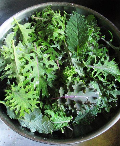 Kale Bowl | Iowa Herbalist