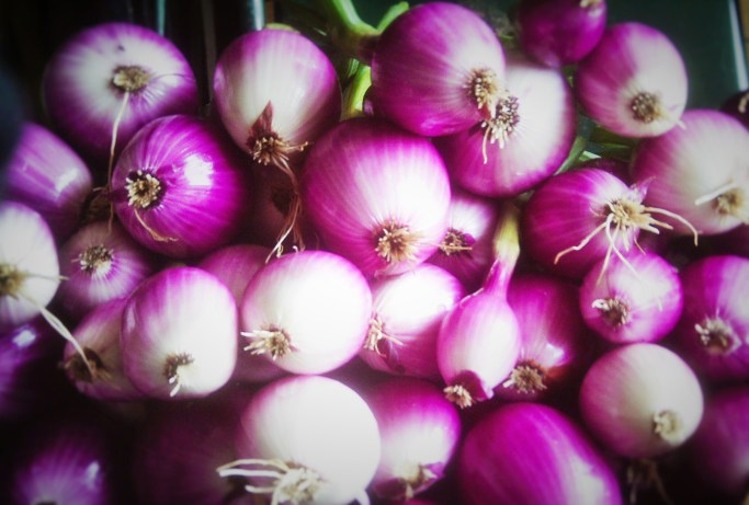Red Onions | Iowa Herbalist
