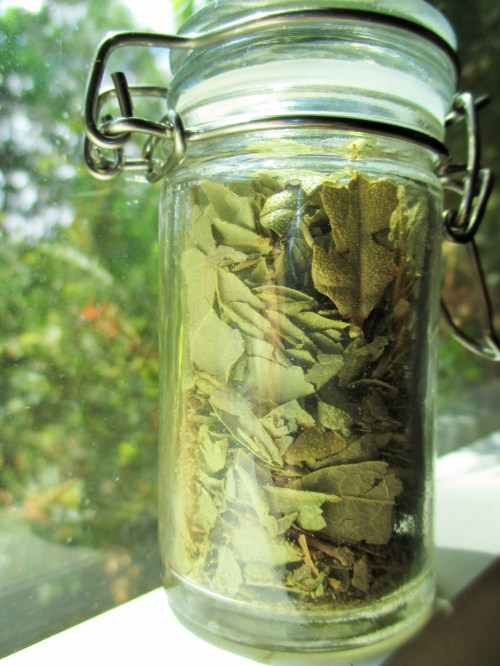 Dried Boldo Leaves | Iowa Herbalist
