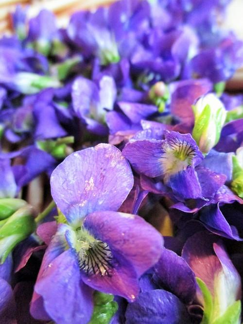 Violet Petals Herbalism | Iowa Herbalist