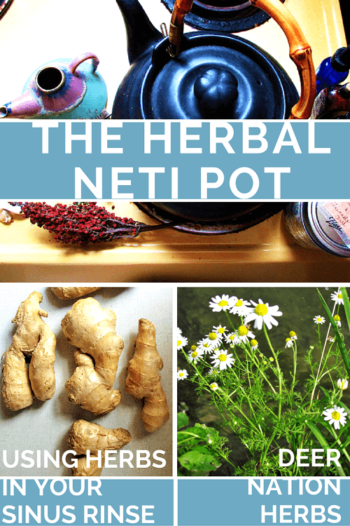 Using a neti pot for allergies, sinus issues, or colds can help with symptoms - and herbs can help. Learn how to use herbs in a neti pot here.