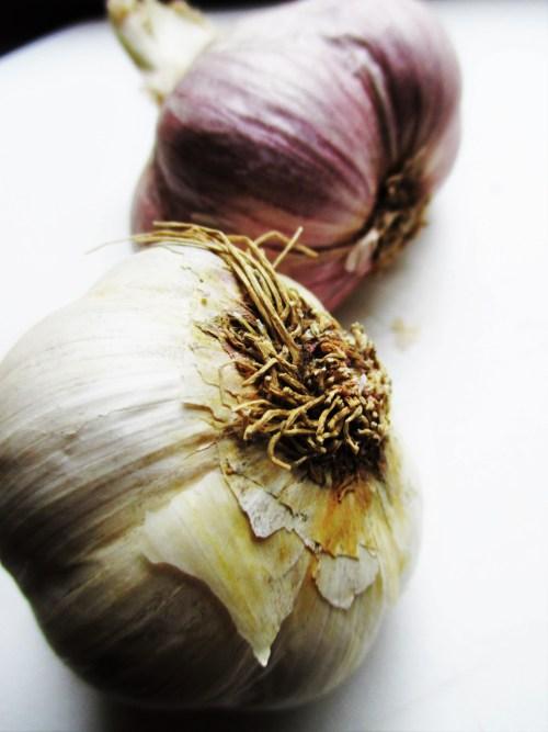 Garlic Herbalism | Iowa Herbalist