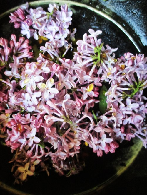 Lilac Simple Syrup Recipe | Deer Nation Herbs