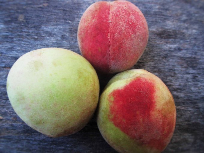 Native Iowa Peaches, Whole | Deer Nation Herbs
