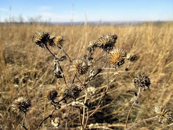 Iowa Prairie | Iowa Herbalist