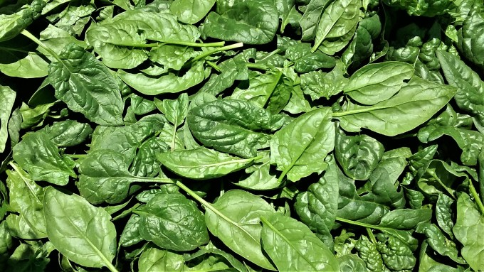 Spinach Leaf | Jupiter Ridge Farm