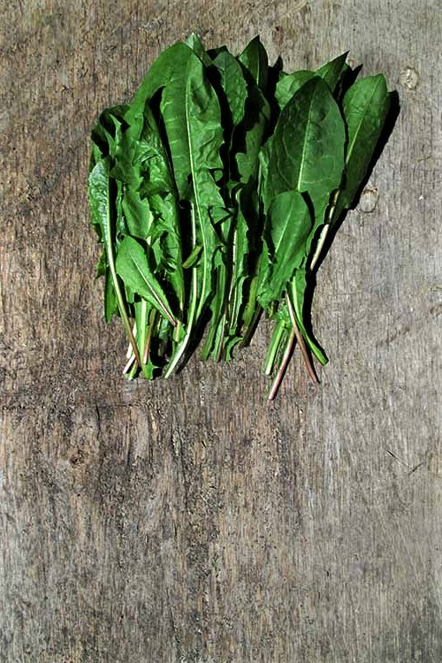 Harvested Spring Dandelion Greens | Iowa Herbalist