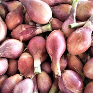 Shallots | Jupiter Ridge Farm