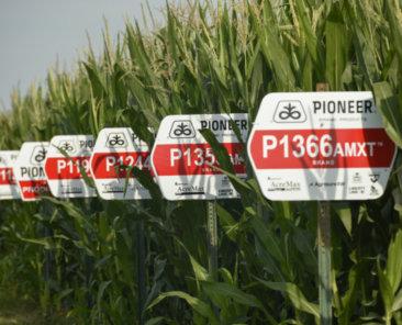 Pioneer signs