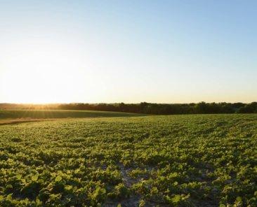 Black Hawk County Iowa Farmland Values