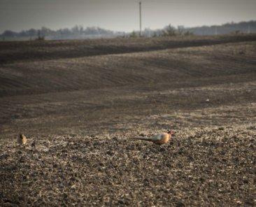 Mills County Iowa Farmland Values