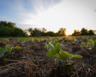 Mitchell County Iowa Farmland Values
