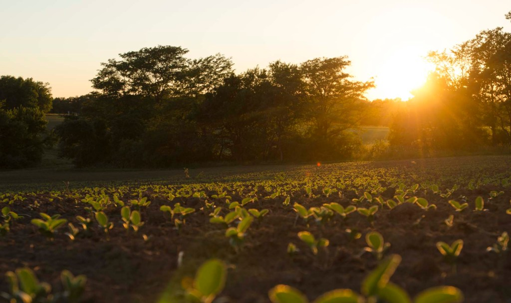 Page County Iowa Farmland Values