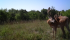Land for sale Appanoose county Iowa