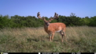 Appanoose County Iowa Hunting land for sale