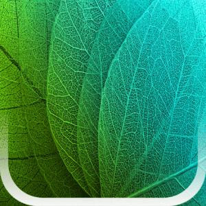 Plants Disease Identification iPA Crack