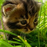iPad Retina HD Wallpaper Cat