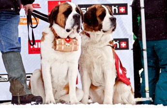 Rescue-team-Swiss-St-Bernard-Dogs-Verbier-Switzerland-April-2010